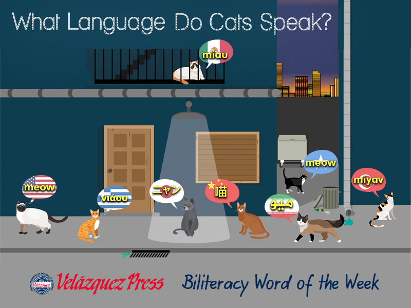 Tumbnail for: What Languages Do Cats Speak?